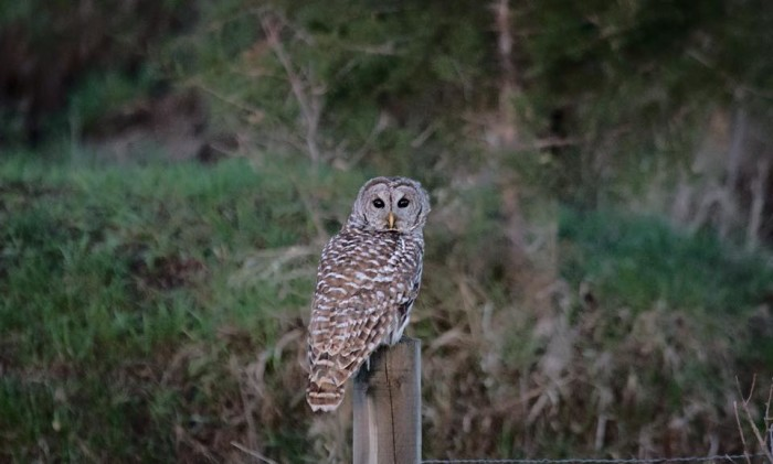 12. Dillon James Hardinger caught the attention of this watchful owl near Garland.
