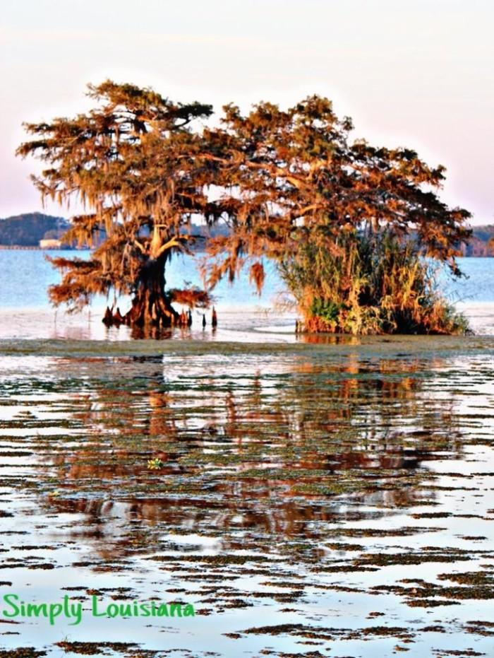 1) Fall has arrived in beautiful Lake Arthur, La by Diedra Hobson Reed