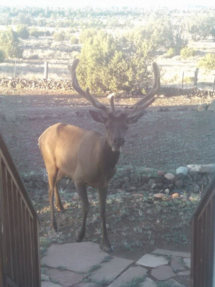 16. Here's another wild animal found outside someone's Arizona home, this time a buck!