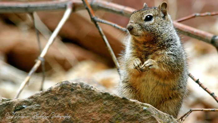 1. Let's start the list with a look at an adorable little ground squirrel seen at the Grand Canyon last week.