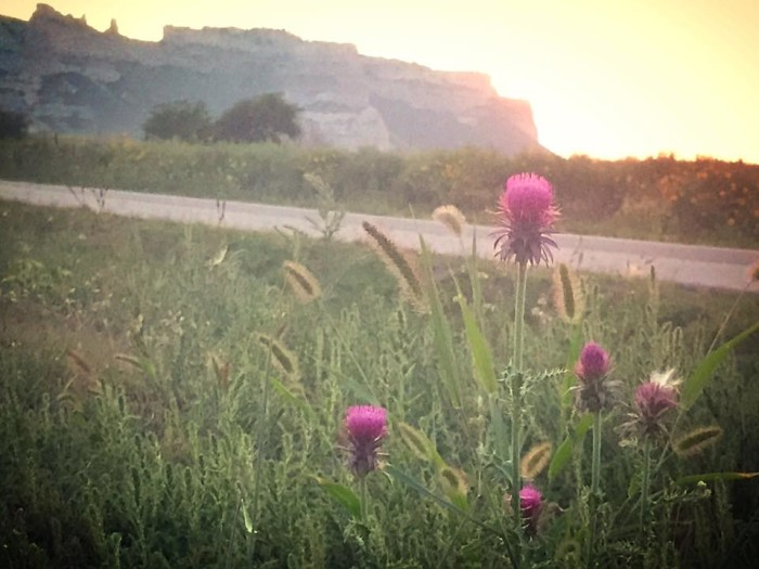 6. The simple beauty of thistles against the backdrop of the western bluffs is truly breathtaking.