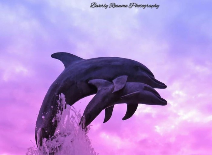 16. This incredible shot was captured at Indian RiverSide Park in Jensen Beach by Beverly Reaume Photography