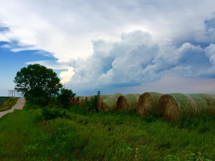 10. Fresh hay bales are lined up along the road near Cedar Rapids.