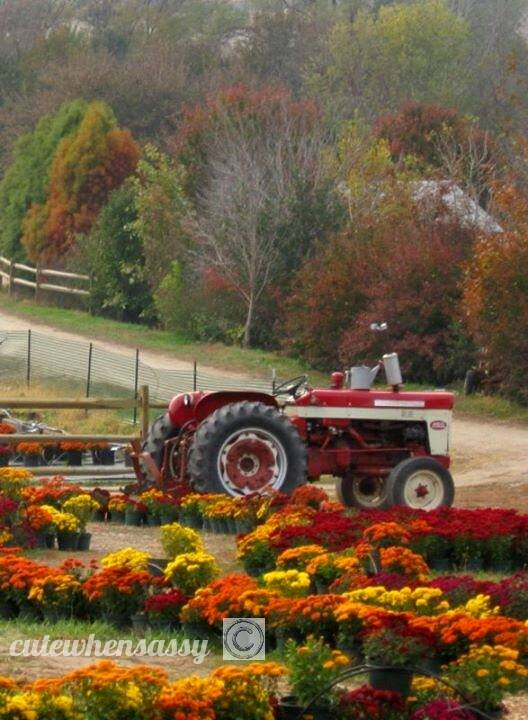 4. A lovely fall scene laid out at Vala's Pumpkin Patch.