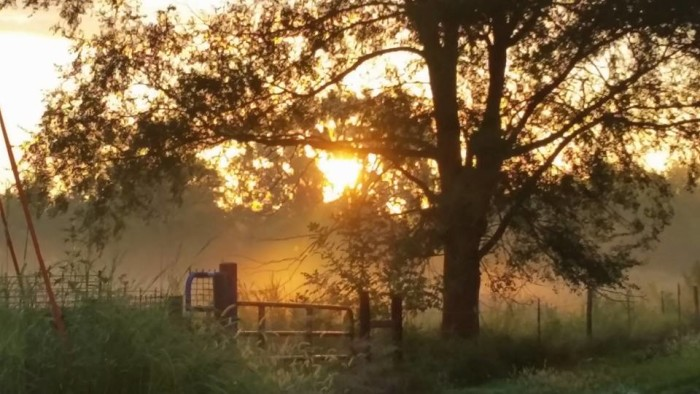 3. The sun illuminates some ethereal early-morning fog.
