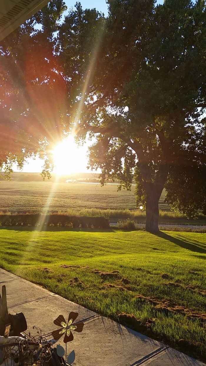 15. The sun rises brightly over the fields of Litchfield.