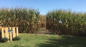 10 Awesome Corn Mazes In Ohio You Have To Do This Fall