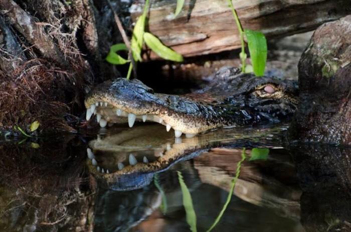 2. Rhett Butler captured this wild scene at Big Cypress National Preserve.
