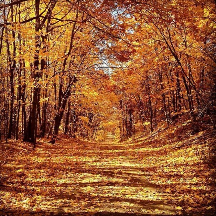 14. Rachel Ann took this golden photo of the foliage at Crow-Hassan Park Reserve.