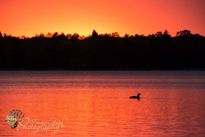 10. Bear Paw Resort has many beautiful photos, but the loon clearly makes this one the best!
