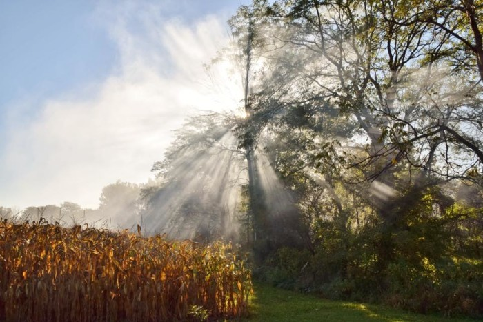 11. Early morning fog in Kansas, OH