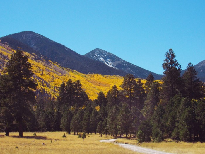 6. Here's a picture of the San Francisco Peaks from Lockett Meadow. This is just one of the many we received.