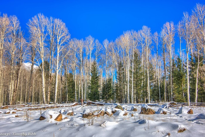 14. And here's another look at the aspen trees near the Peaks. Although the photographer did not mention when the photo was taken, I bet the area will look like this soon enough!