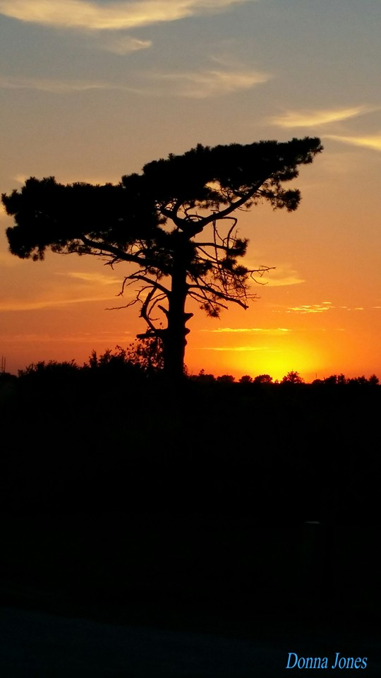 25. This is the photographer's favorite tree in Chester to snap at sunset, and we can see why!