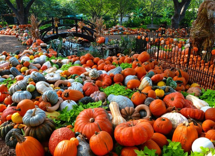 10 Great Pumpkin Patches In Texas