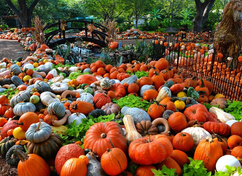10 great pumpkin patches in texas - Botanic gardens pumpkin festival ...