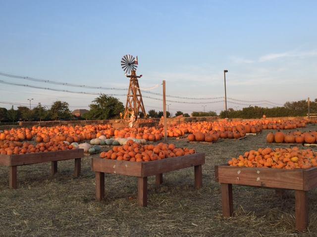 9) Pumpkins on the Prairie (Frisco)