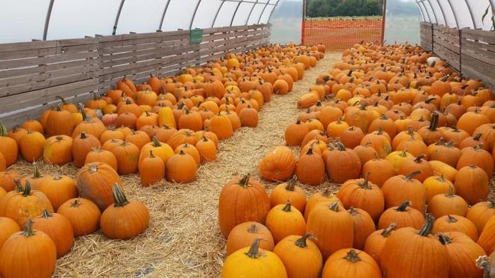 12. Local Pumpkin Patches