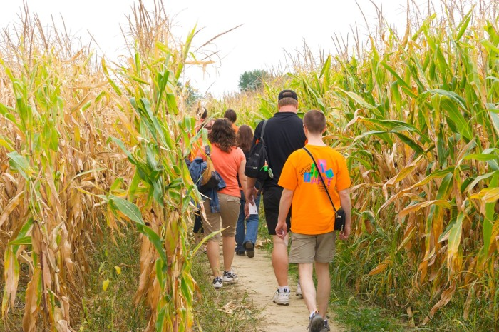 2. Young's Jersey Dairy's Cowvin's Corny Maze (Yellow Springs)