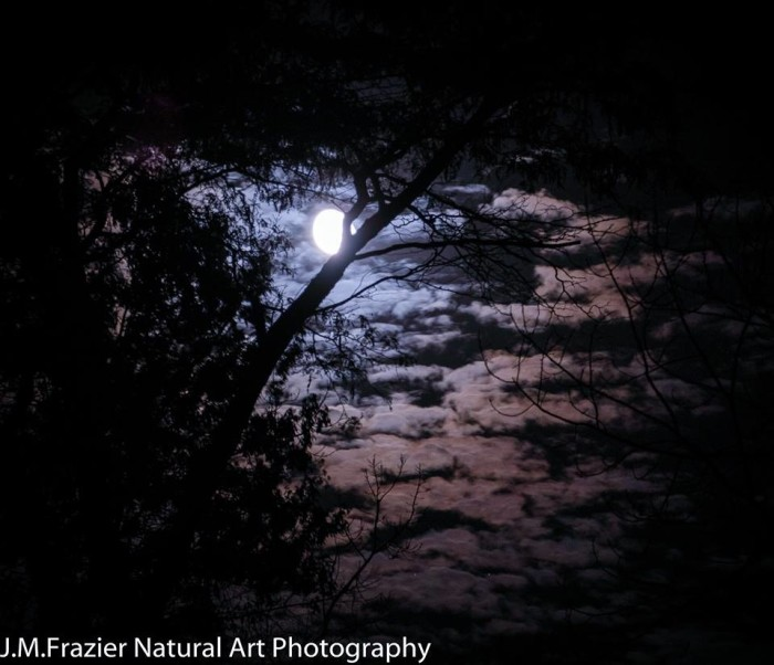 """9. Jeff Frazier shared a picture he called """"Moonlight in the Forest"""" of Miami Co, with us on our Facebook page!"""