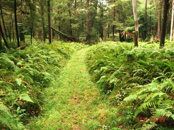 19. A green path through Cook Forest.