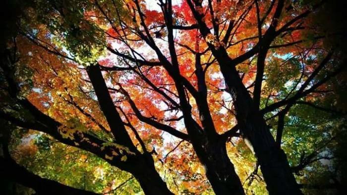8. Fall foliage in Bolivar, OH