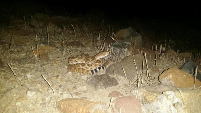 17. Yikes! Glad our reader saw this night dweller before anyone stepped on him!
