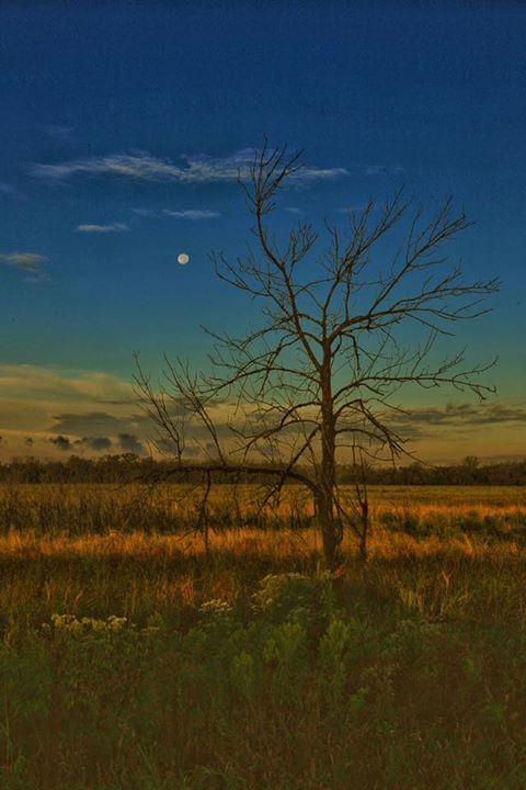 7. Elmer Smith took this gorgeous shot at DeSoto Bend in Missouri Valley.