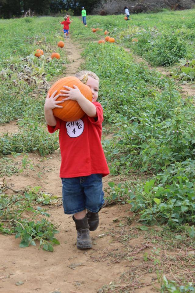 7. Holland Farms Pumpkin Patch & Maze, Milton