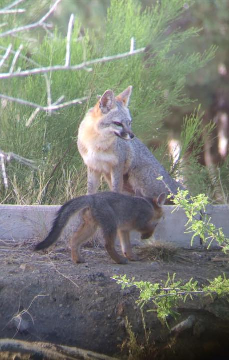 15. A reader shared a photo of some repeat backyard visitors to her home in Bagdad.