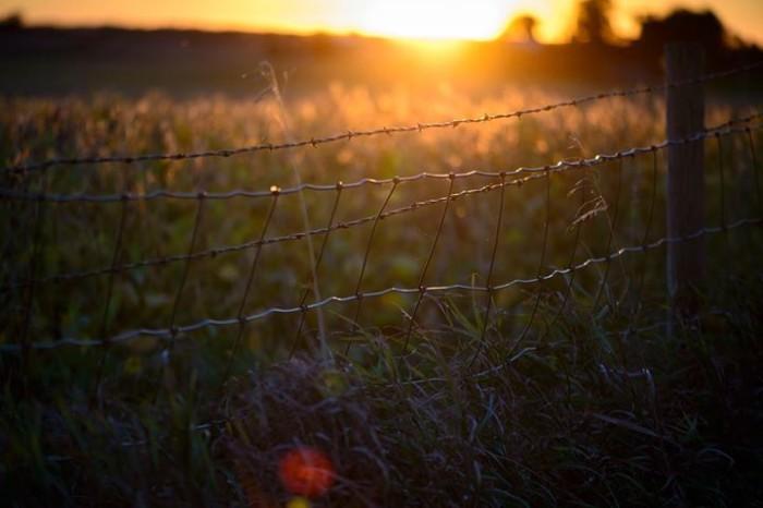 9. Rich Herrmann got the perfect shot of the golden light on a bean field south of Mount Vernon.