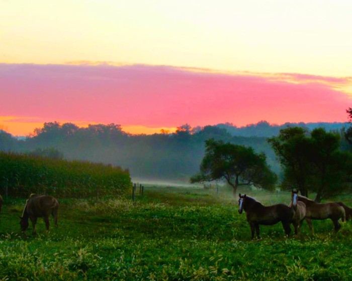 14. These horses are the perfect addition to a breathtaking landscape in Lancaster County.