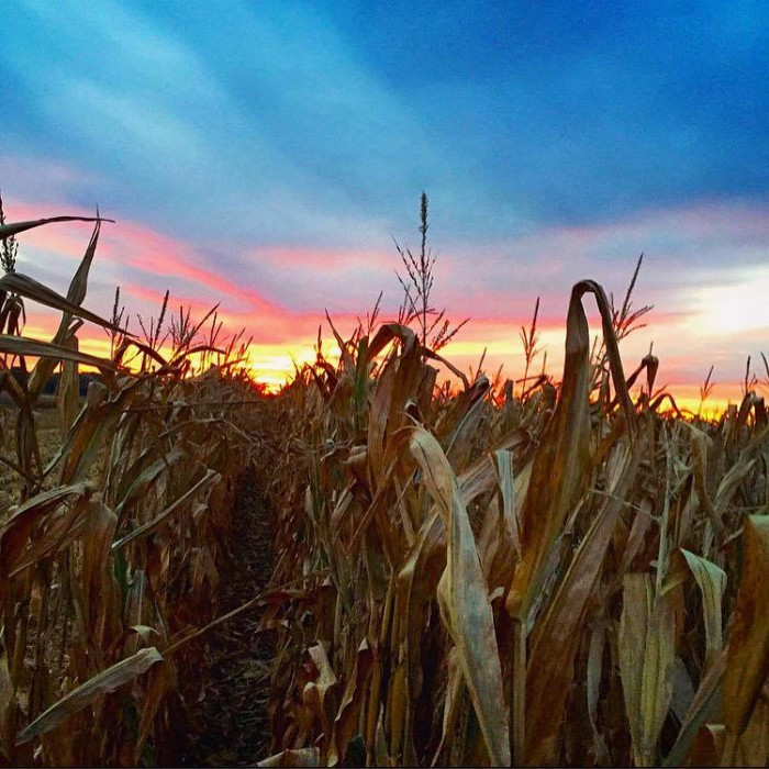 8. Gary's Berries and Corn Maze (Grantville)