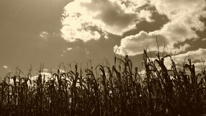 9. Sarah McKinley‎ also shared a picture of a cornfield in Sullivan County.
