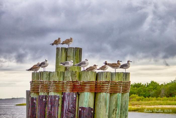 6. Speaking of birds...