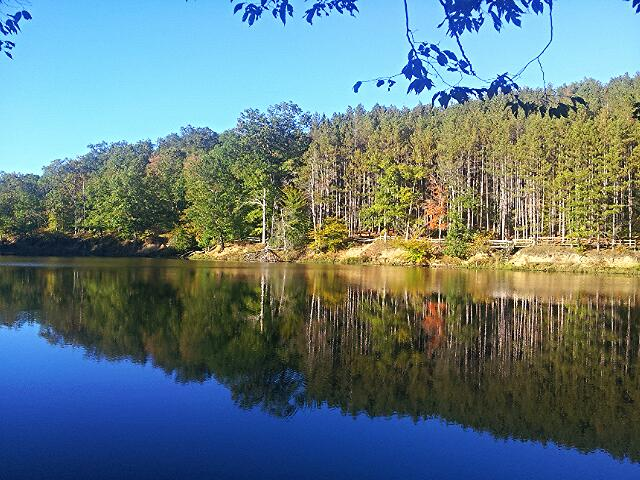 4. Kelly Lynn shared an incredible picture of Brown County State Park with us!