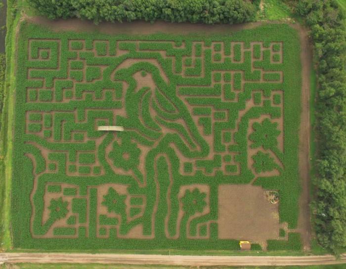 1. Gaeddert Farms Corn Maze (Buhler)