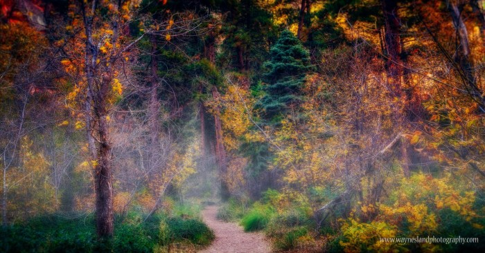3. Here's a dreamy view of Oak Creek Canyon on a cool morning this time of year.