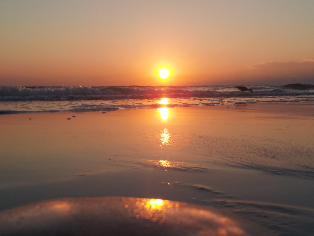 17. Steve Harp sent us this incredible photo from North Redington Beach of the sunset reflected off the top of a jellyfish