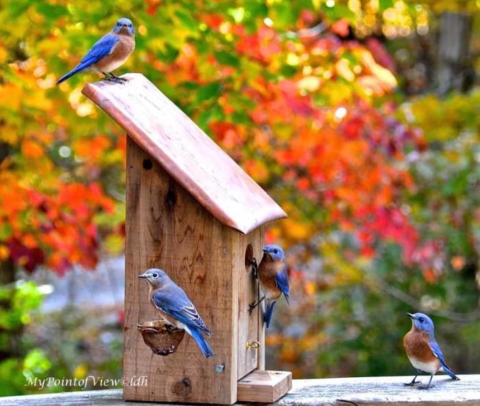 5. Early birds.