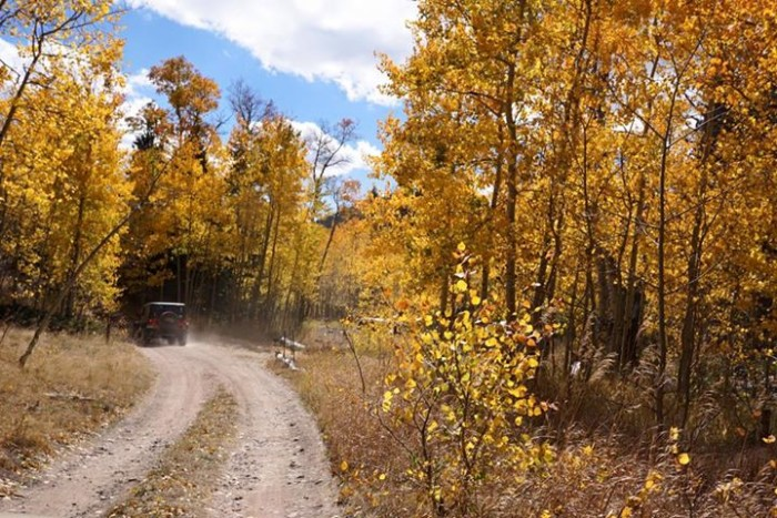 "5. ""I never knew the trail next to Sand Dunes would be great for fall pics but it was!"""