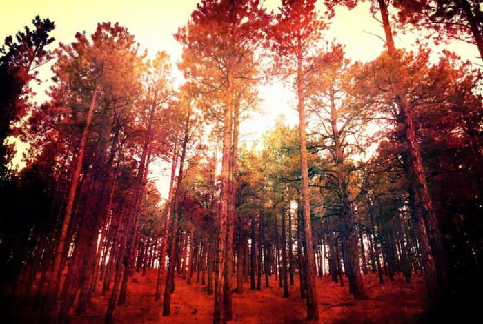 2. This dreamy view (thanks to some tinting) is of the pines in Flagstaff.