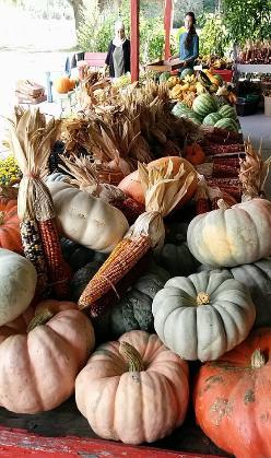 2. Fruit Village Grove's 27th Annual Pumpkin Festival, Sarasota