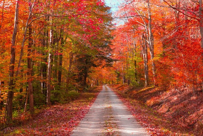 7. Devyn Rose submitted this great picture of a country road being overtaken by fall color.