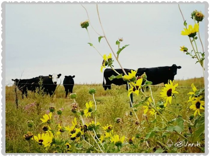 """5. """"You see wild sunflowers, I see steaks!"""""""