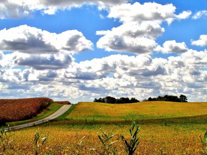 15. Tony Hickman shared a cloudy fall day somewhere in Indiana with us on Facebook. The entire picture is so colorful and pretty!