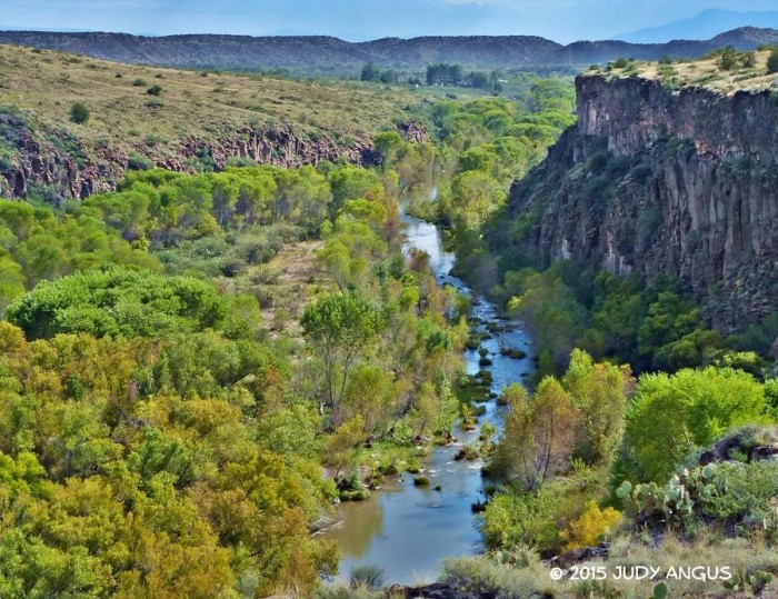 16. If you needed evidence that the leaves along the Verde River are starting to change color, Judy got this picture to prove it.