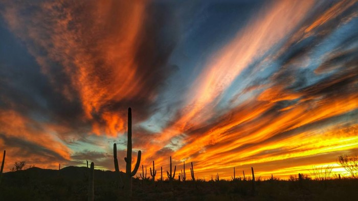 8. What better way to show off how amazing Arizona is than with a stunning sunset view? The photographer said this was taken at Saguaro West Park in Tucson.
