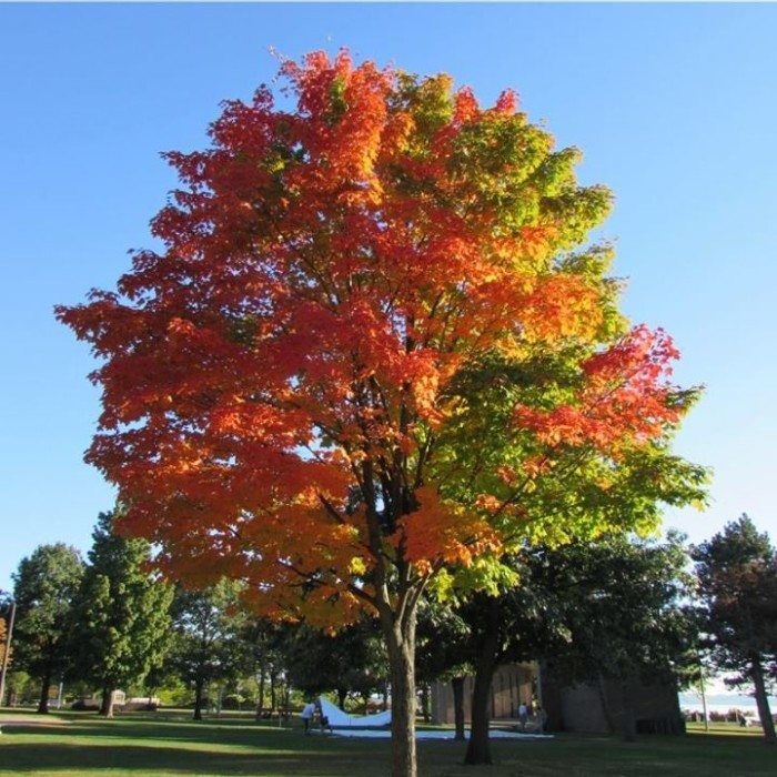 11) Carol Ann Wooster caught this tree at the perfect time mid-foliage season.