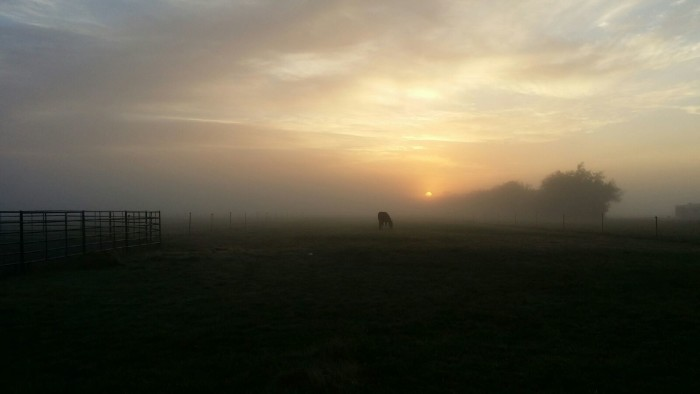 8) Angela Kennedy Alcorn sent in this amazing image of a foggy morning in Corvallis.